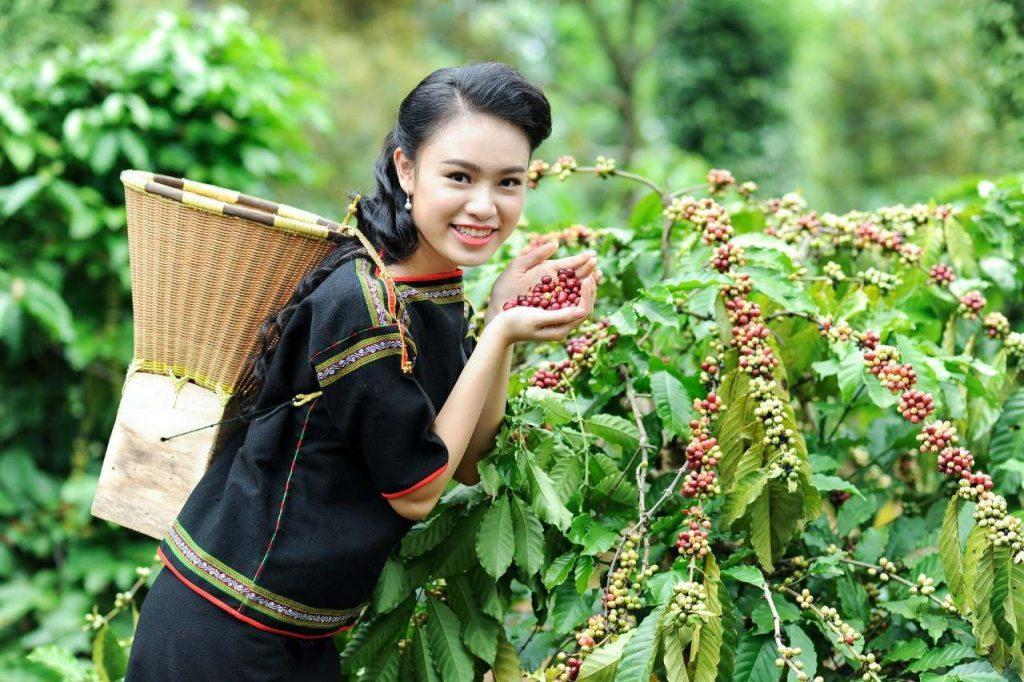خرید قهوه روبوستا اندونزی رست مدیوم